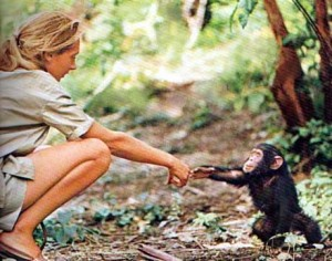 Iconic Jane Goodall photo from National Geographic