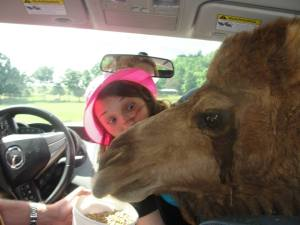 Melissa and the camel attack.