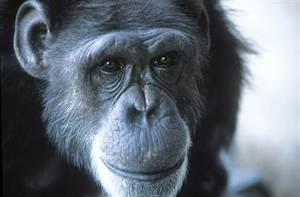 Washoe.  http://en.wikipedia.org/wiki/Washoe_(chimpanzee)