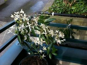 My dear Plant.
