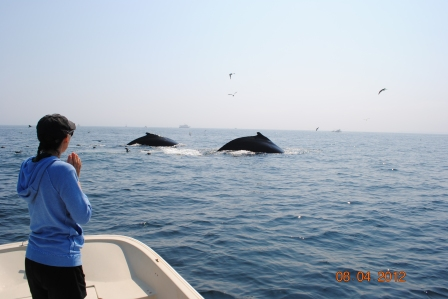 Whale Watching 047